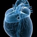 Niezwykła substancja odżywcza, która obniża ciśnienie krwi