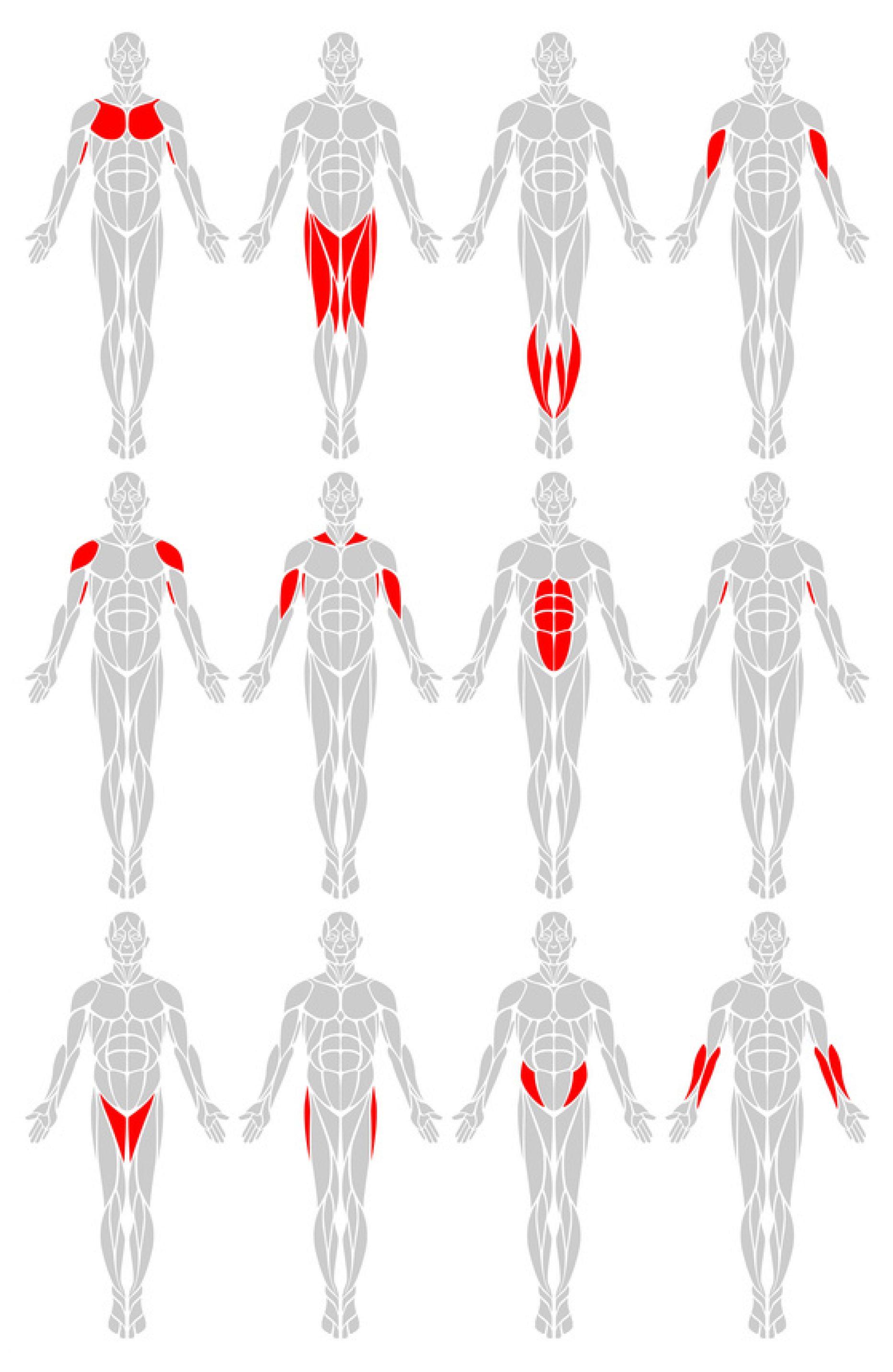 Barwniki i muskuły