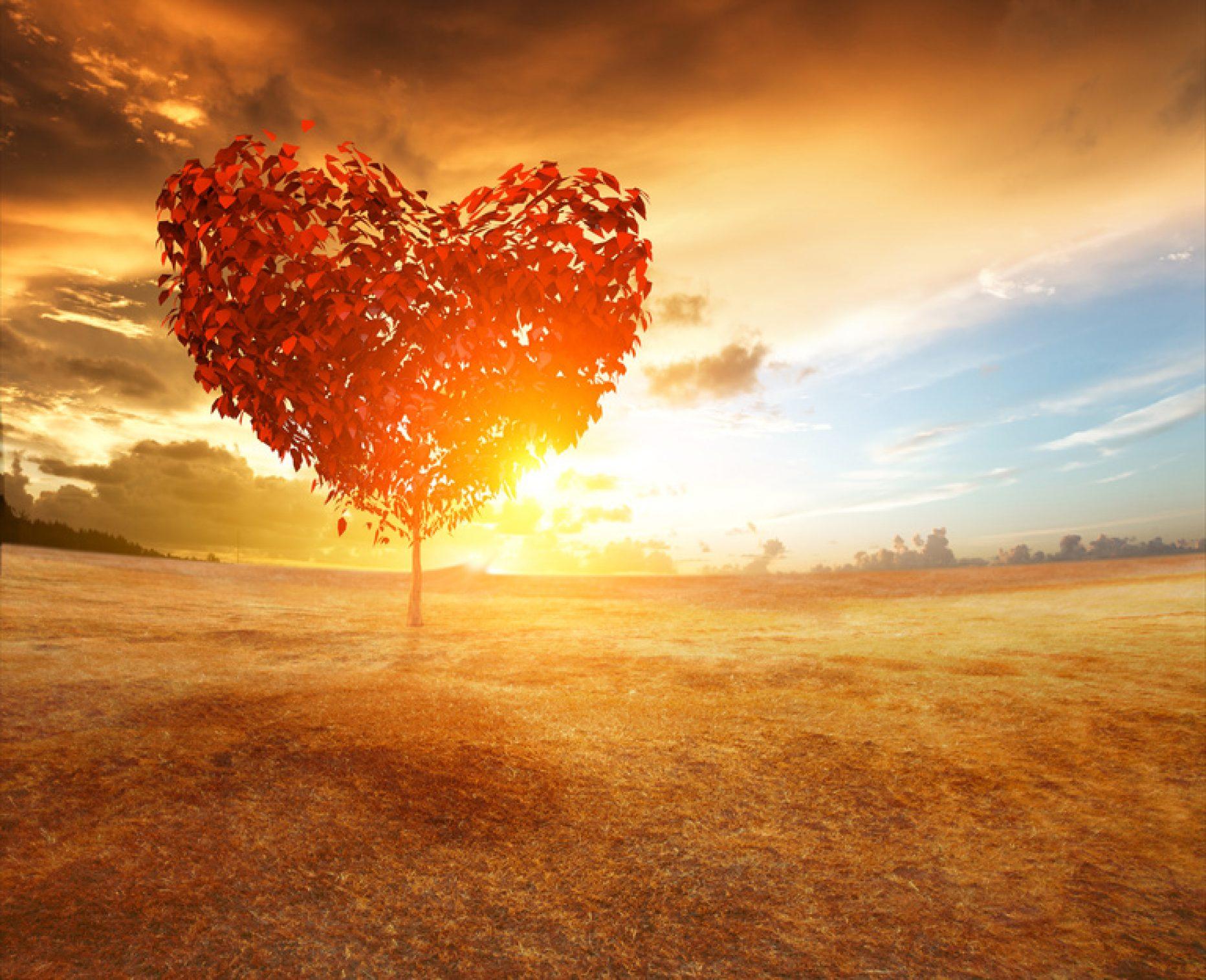 Karnozyna – przyjaciółka serca