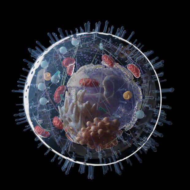 Na odsiecz mitochondriom